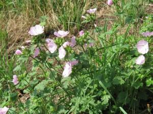Schwarzwaldblumen