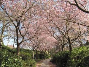 Weg durch die Blütenpracht